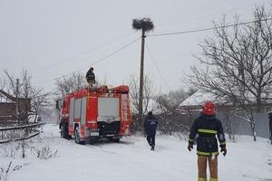 В Украине холод убивает перелетных птиц. Как им помочь
