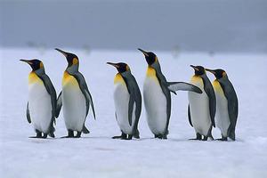 Ученые обнаружили останки гигантского доисторического пингвина в Новой Зеландии