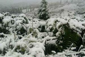 Мощный снегопад в Карпатах. Спасатели эвакуировали детский лагерь