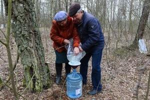 В лес со штангенциркулем: в РФ ввели ограничения на сбор грибов и березового сока