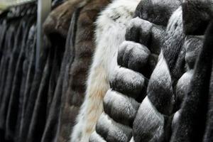 Норвегия запретит выращивание норок и лис для меховой одежды