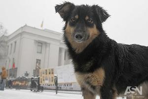 Знімають стрес: догхантери відстрілюють собак у притулку під Києвом