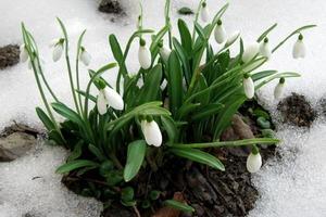 Через неделю весна: как подготовиться знакам Зодиака