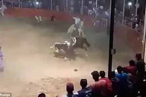 Бык проткнул рогами лошадь и наездника на родео в Мексике