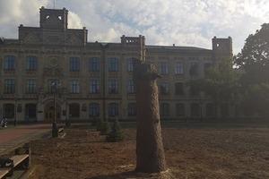 Скандал в Киеве: в парке КПИ Киевзеленстрой спилил столетние деревья