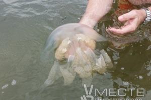 Побережье азовского моря заполонили огромные жалящие медузы (видео)