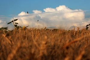 Президент Украины подписал антирейдерский земельный закон, касающийся раздела и обмена с\х земель