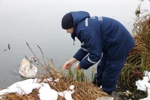 Винницкие спасатели помогли лебедю выбраться из ледяной воды