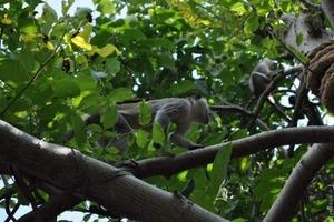 Под Одессой в людских садах поселилась стая обезьян (фото)