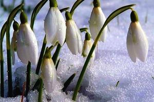 Как успеть до весны изменить свою жизнь