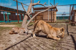 Хуже животных: в РФ посетители зоопарка напали на зверей