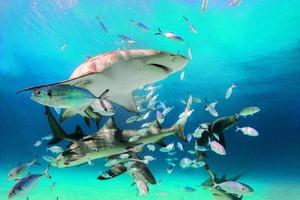 Работница торгового центра упала в резервуар с голодными акулами