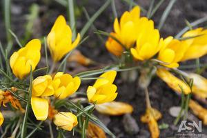 Народные приметы на 9 мая - День Глафиры горошницы