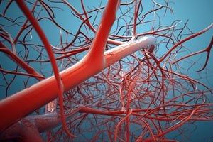 Ученые научились регенерировать кровеносные сосуды