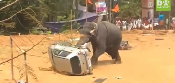 ВИндии разъяренный слон напал наавтомобиль