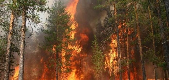 Взоне ЧАЭС появился пожар, уровень радиации повысился в2,5 раза