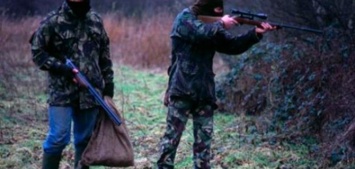 ЗМІ: НаЗакарпатті депутата райради затримали звбитим оленем