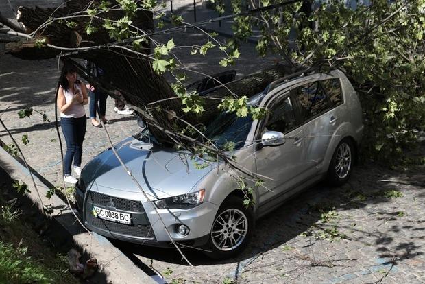 Во Львове дерево разбило автомобиль нардепа от БПП