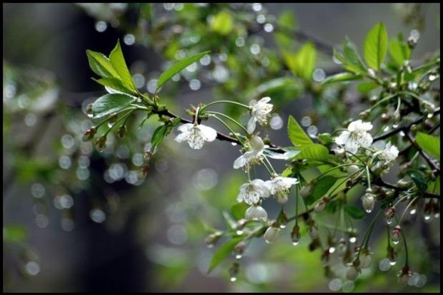 В Украине 12 мая пройдут дожди с грозами