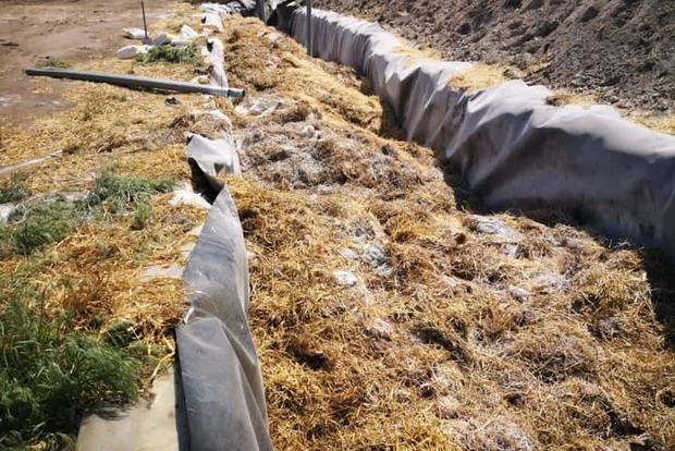 Вонь и яд. 600 тыс. дохлых курей захоронила Кременчуцкая птицефабрика на паях крестьян - Кива