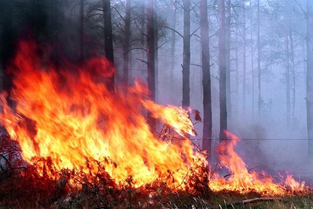 В Лос-Анджелесе горит лес, введен режим ЧС