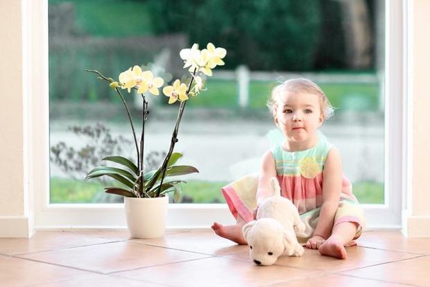 Какие растения стоит держать дома каждому знаку Зодиака на удачу