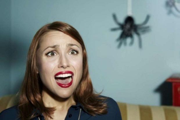 Паук в доме: о чем предупреждает примета и почему нельзя убивать букашку