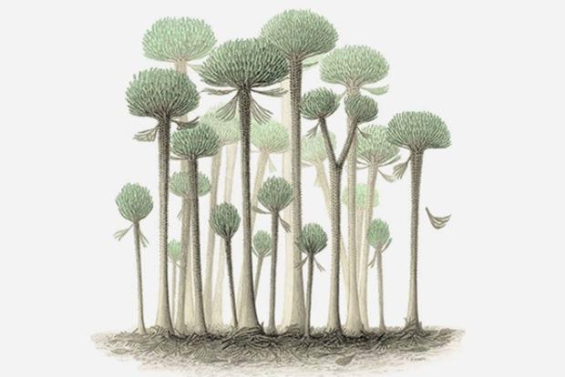 Найдены останки древних деревьев-грибов