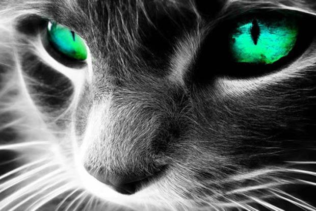 Как кошки защищают вас и ваш дом от всего негатива и зла