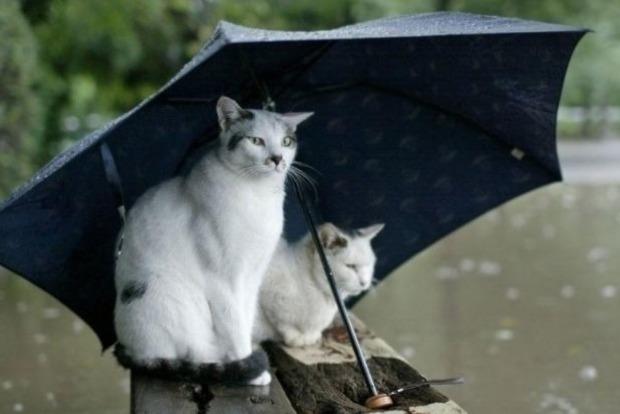 На западе и севере Украины в ближайшие дни ожидаются дожди с грозами