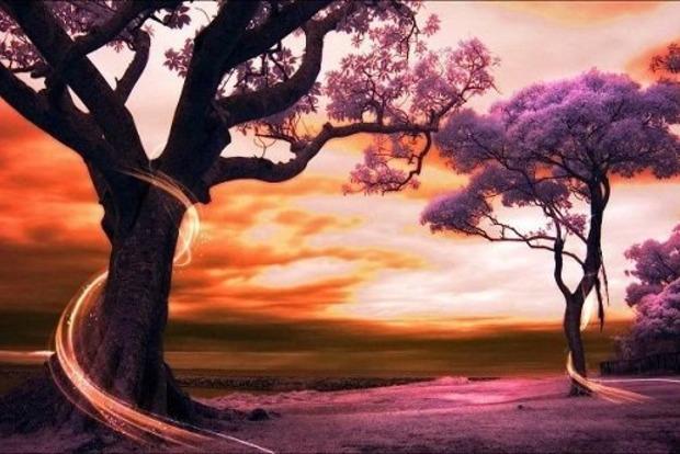 Какие деревья питают людей силой, а какие - вампиры
