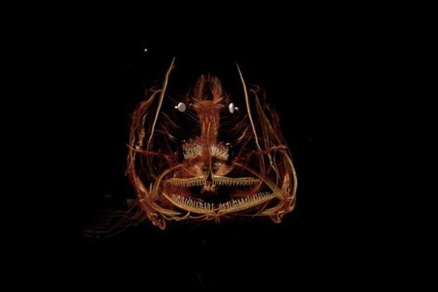 Ученые показали рыбу, пойманную на глубине 8 километров