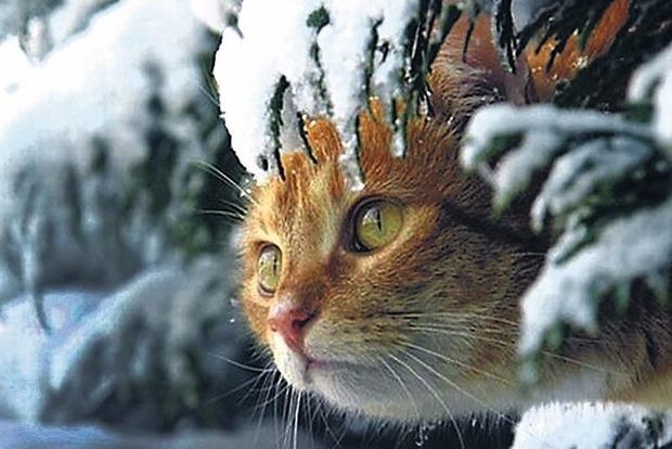 Украину «накроют» две волны холода - на Рождество и Старый Новый год