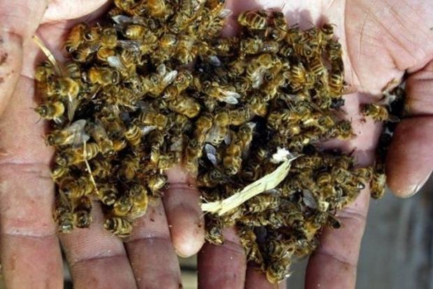 Преступники отравили пестицидами больше половины пчел в Украине
