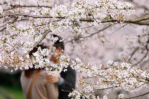 Что принесет эта весна каждому знаку Зодиака