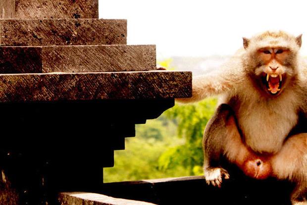 В Индии обезьяны убили человека кирпичами