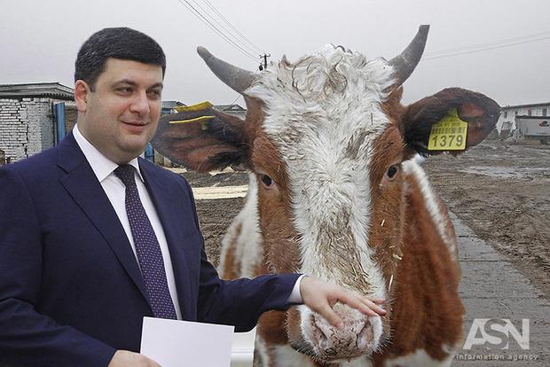 «Доить по-новому». Как в Министерстве агрополитики видят решение проблемы качества домашнего молока