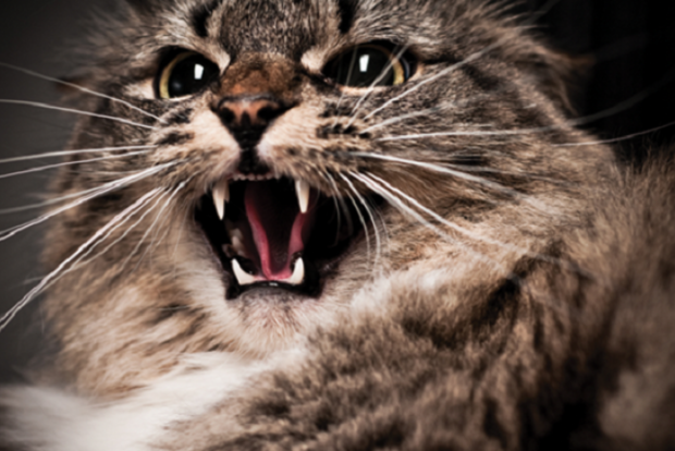 В селе Киевской области ввели карантин из-за бешеной кошки