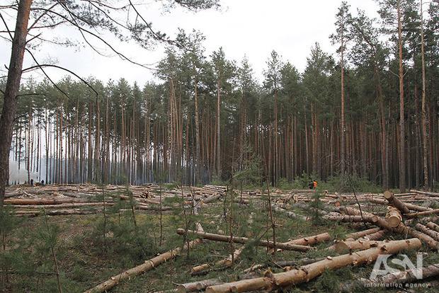 Секретные рубки: экологи рассказали, как Гослесагентство скрывает данные об уничтожении лесов