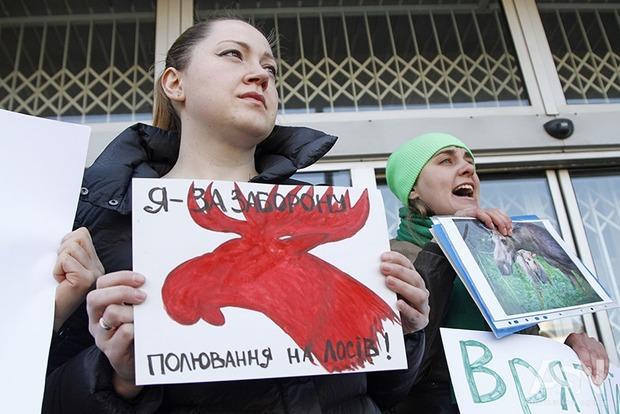 В Украине осталось меньше 2 тыс. лосей. Министерство экологии разрешает отстреливать