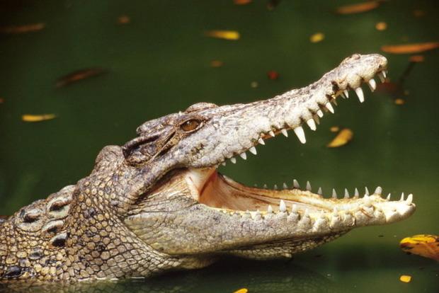 Американская школьница отбилась от крокодила голыми руками