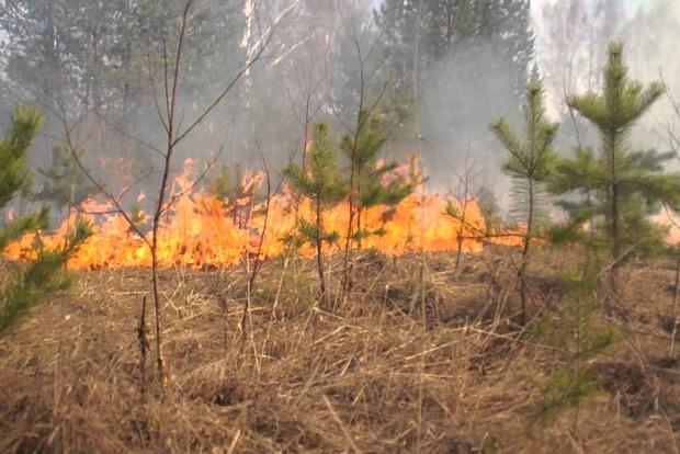 В Украине ожидают пожарную опасность 4-5 класса