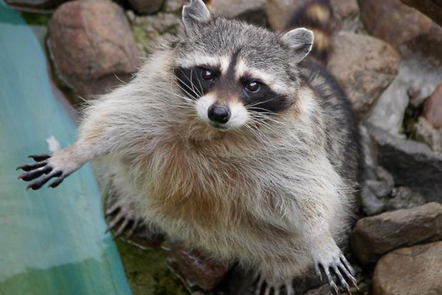 Вконтактном зоопарке из-за прорыва трубы живьем сварились десятки животных— Мертвые все