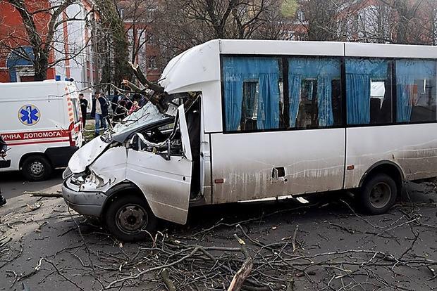 В Николаеве дерево рухнуло на маршрутку: пострадали дети