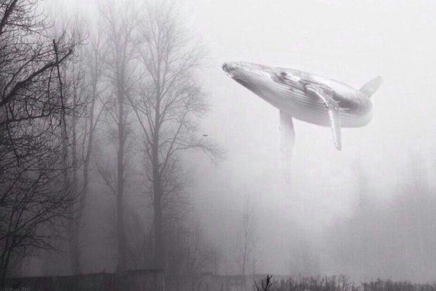 «Синий кит» на Закарпатье заставил подростков разбрасывать навоз и грести сено