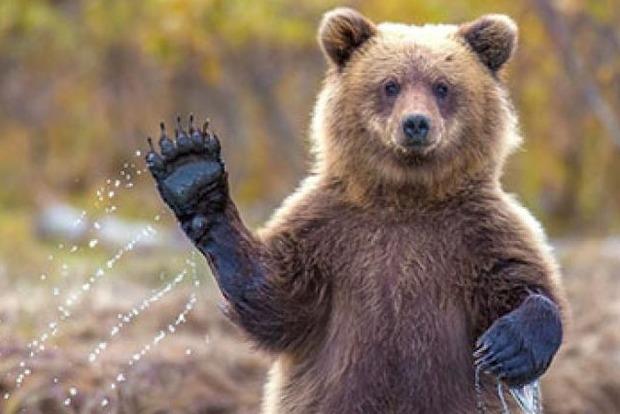 «Породистый щенок» оказался медведем - хозяева не догадывались два года