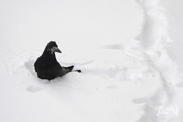 Где на выходных в Украине похолодает до -16