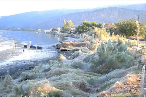 Пауки взяли в плен берег озера в Греции