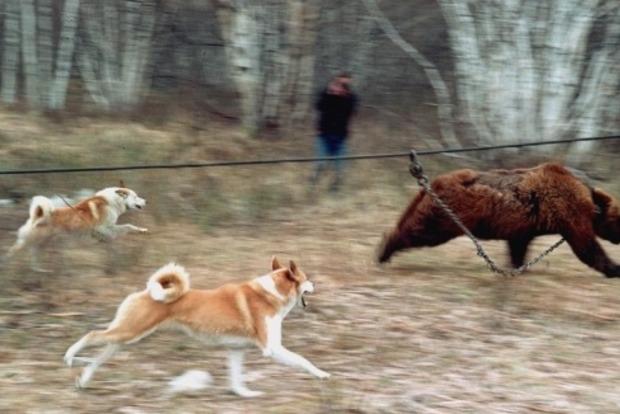 Жахливі знущання: у притравочних станціях по всій Україні в страшних муках гинуть дикі тварини