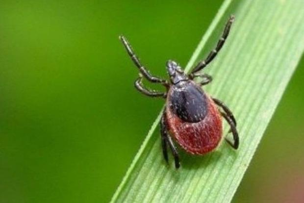 Медики рассказали, как на природе не заразиться клещами и паразитами